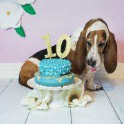 http://www.boredpanda.com/my-basset-hound-had-the-cutest-cake-smash-ever/