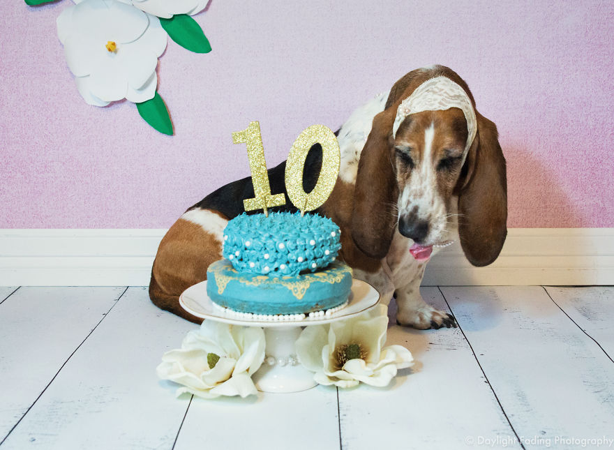 http://www.boredpanda.com/my-basset-hound-had-the-cutest-cake-smash-ever/